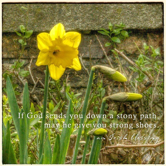 Daffodils in Dublin