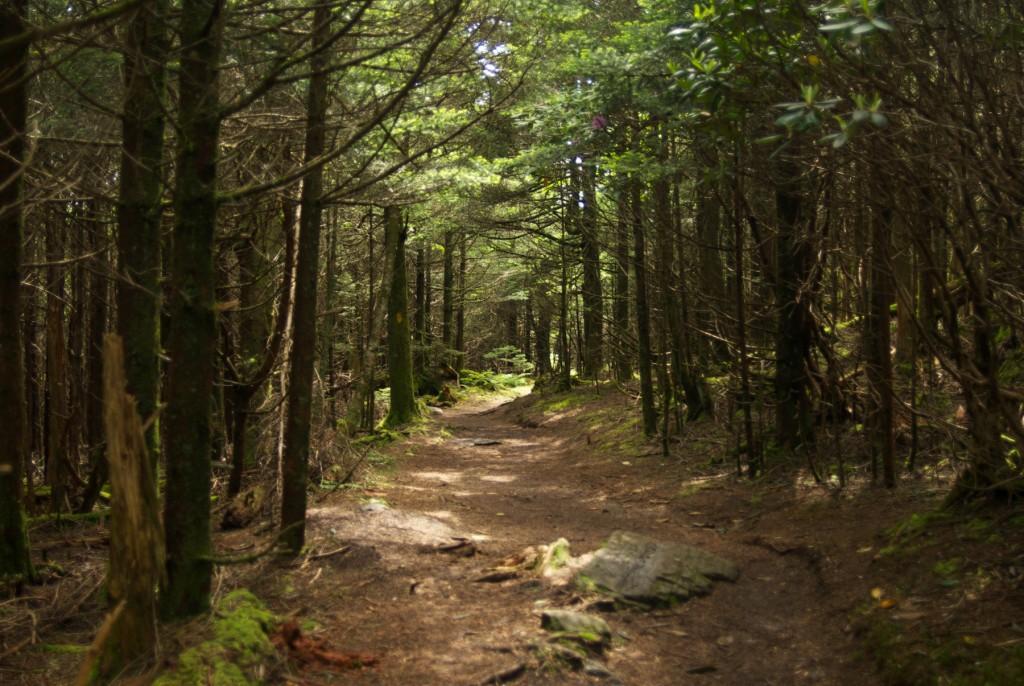 Roan Mountain pathway