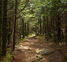Roan Mountain pathway