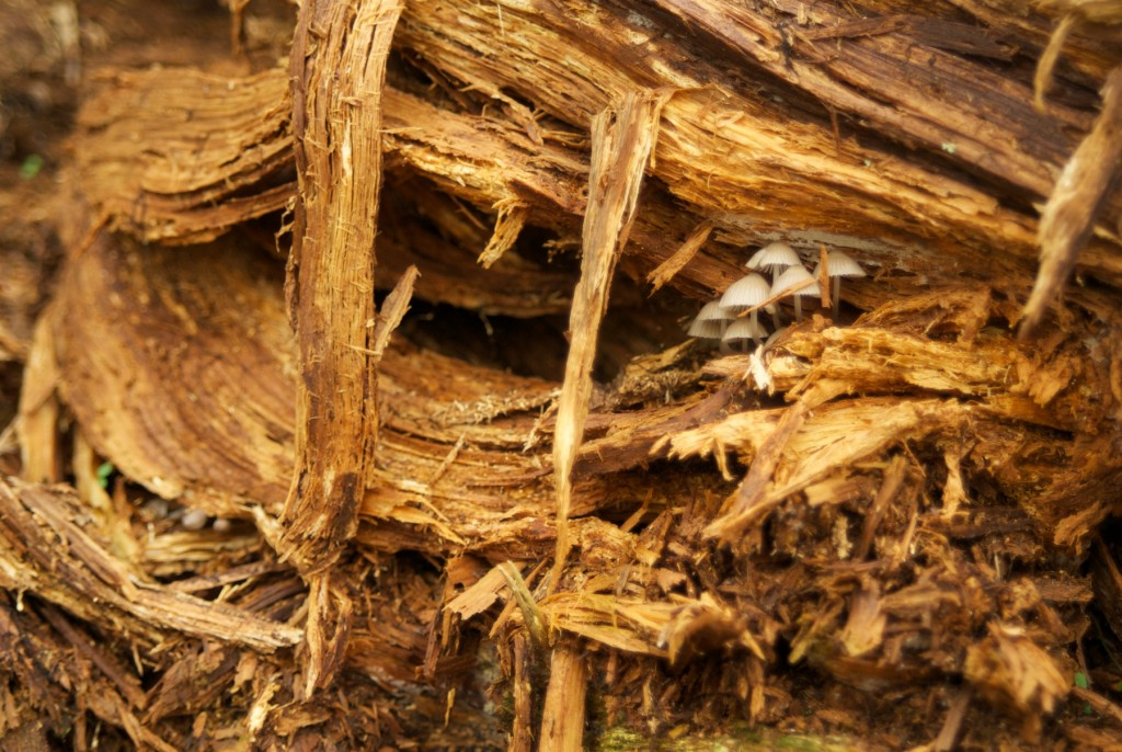 Tiny Mushrooms, Roan Mountain, NC