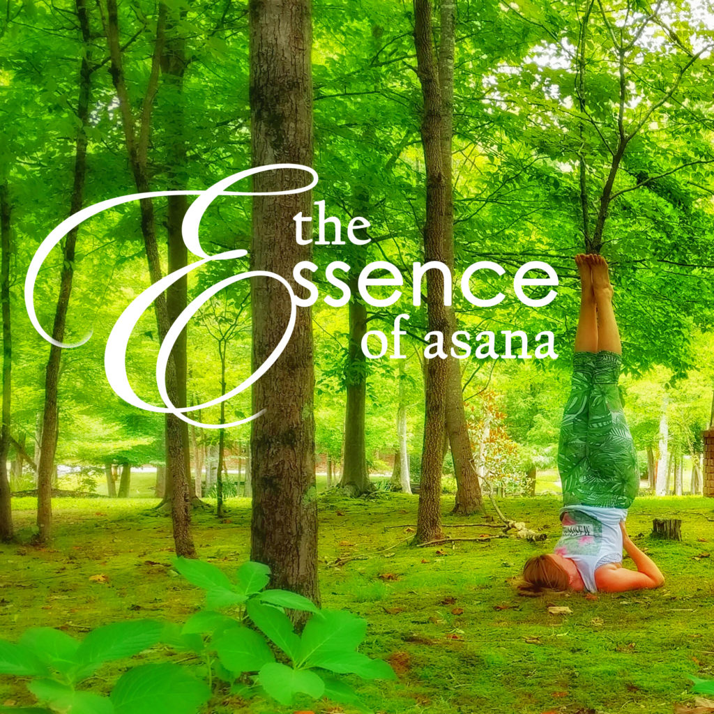 The Essence of Asana: Vitality & Longevity in the Yoga Practice - a 50 hour YTT immersion
